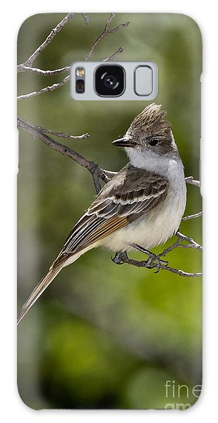 Ash-throated Flycatcher Galaxy Case