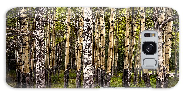 Aspen Trees Canadian Rockies Galaxy Case