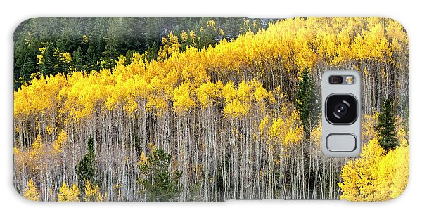 Aspen Trees In Fall Color Galaxy Case