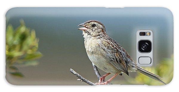 Bachman Sparrow Galaxy Case