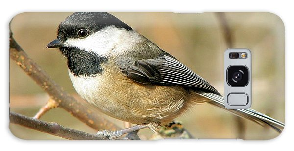 Black-capped Chickadee Galaxy Case
