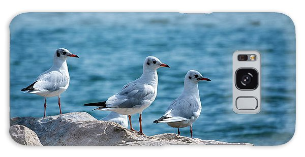 Black-headed Gulls, Chroicocephalus Ridibundus Galaxy Case by Elenarts - Elena Duvernay photo