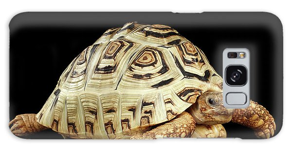 Closeup Leopard Tortoise Albino,stigmochelys Pardalis Turtle With White Shell On Isolated Black Back Galaxy Case