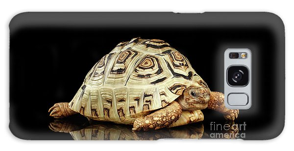 Closeup Leopard Tortoise Albino,stigmochelys Pardalis Turtle With White Shell On Isolated Black Back Galaxy Case
