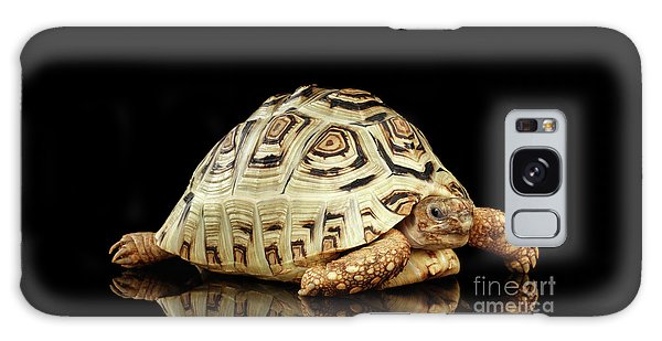 Closeup Leopard Tortoise Albino,stigmochelys Pardalis Turtle With White Shell On Isolated Black Back Galaxy Case by Sergey Taran