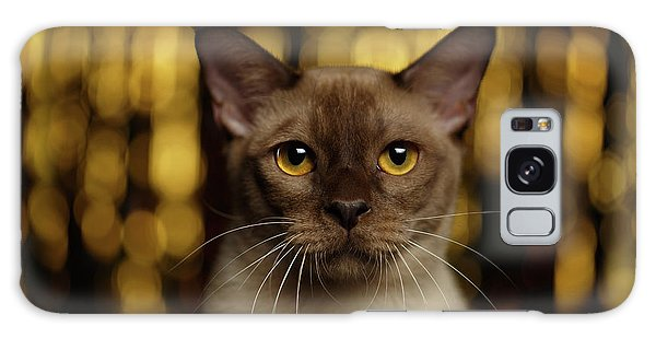 Cat Galaxy S8 Case - Closeup Portrait Burmese Cat On Happy New Year Background by Sergey Taran