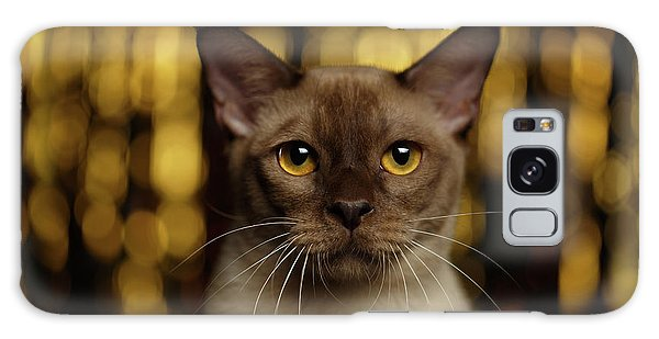 Cat Galaxy Case - Closeup Portrait Burmese Cat On Happy New Year Background by Sergey Taran