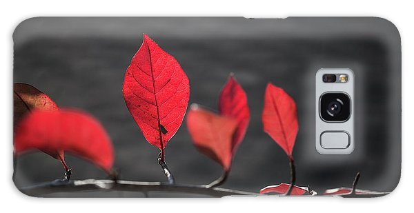 Colorful Tree Leaves Changing Color For Auyumn,fall Season In Oc Galaxy Case by Jingjits Photography