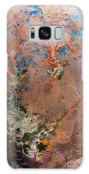 Feather Stars Galaxy Case - Colourful Sea Fan With Crinoid, Papua by Steve Jones