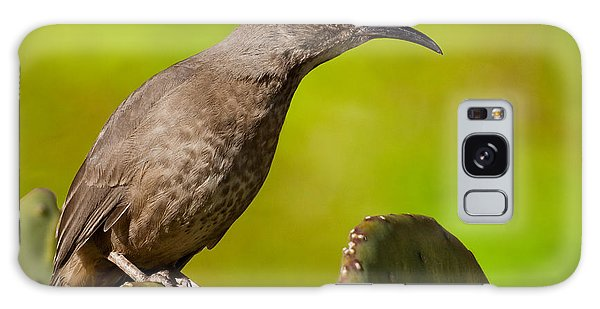 Curve-billed Thrasher On A Prickly Pear Cactus Galaxy Case