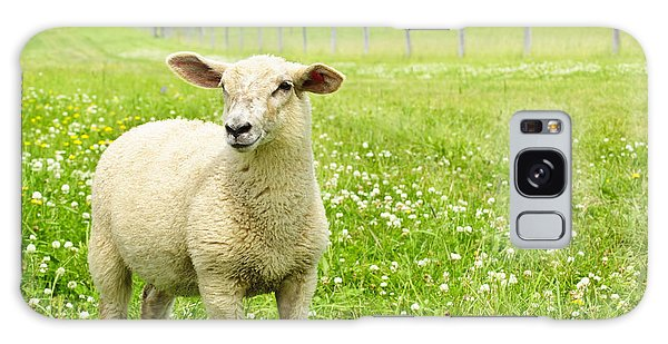 Cute Young Sheep Galaxy Case