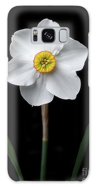 Daffodil 'cantabile' Galaxy Case