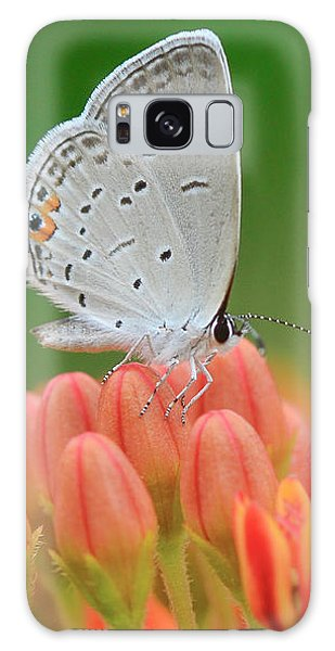 Eastern Tailed Blue On Butterfly Weed Galaxy Case