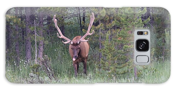 Bull Elk Rocky Mountain Np Co Galaxy Case
