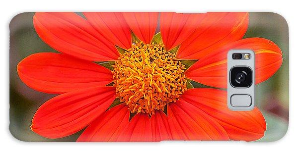Fall Flower Galaxy Case by Edward Peterson