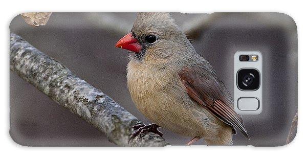 Female Cardinal Galaxy Case