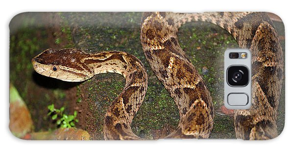 Fer-de-lance, Bothrops Asper Galaxy Case