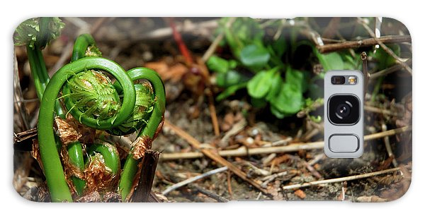 Houlton Galaxy Case - Fiddleheads 2017 1 by Rodger Wilkie