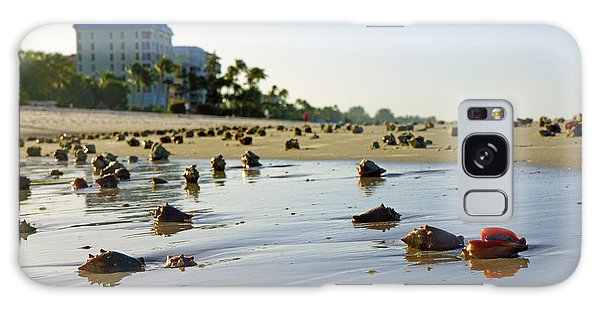 Fighting Conchs On The Beach In Naples, Fl Galaxy Case