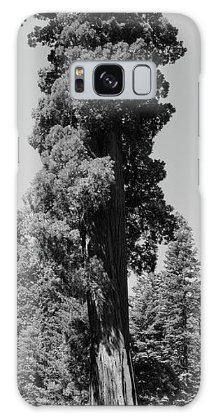 Giant Sequoia, Sequoia Np, Ca Galaxy Case