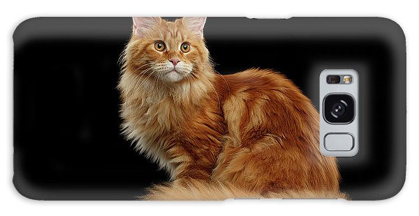 Cat Galaxy S8 Case - Ginger Maine Coon Cat Isolated On Black Background by Sergey Taran