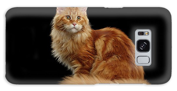 Ginger Maine Coon Cat Isolated On Black Background Galaxy Case
