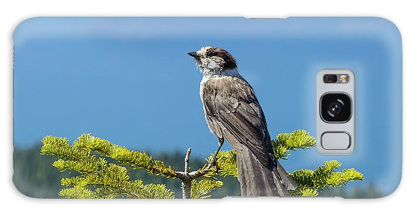 Gray Jay Galaxy Case by Kathy King