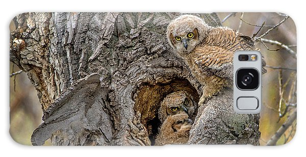 Great Horned Owlets In A Nest Galaxy Case