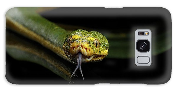 Green Tree Python. Morelia Viridis. Isolated Black Background Galaxy Case