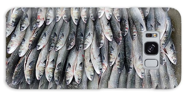 Grey Mullet Fish For Sale At The Fish Market Galaxy Case by Yali Shi