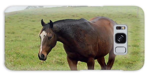 Horse In The Fog Galaxy Case by Pamela Walton