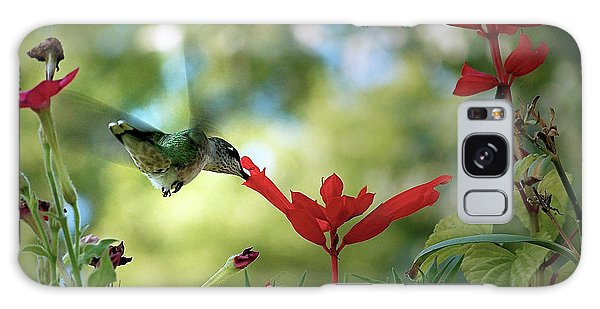 Hummingbird Delight Galaxy Case by Sue Stefanowicz
