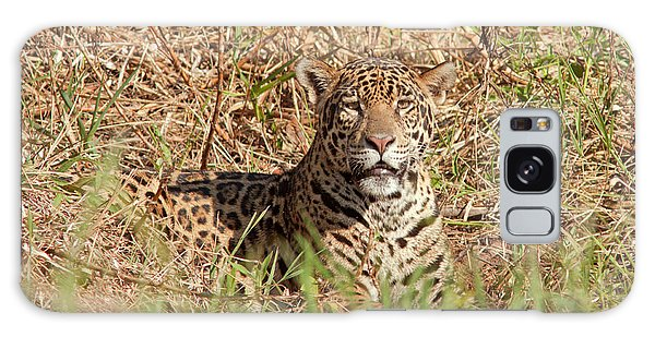 Jaguar Watching Galaxy Case
