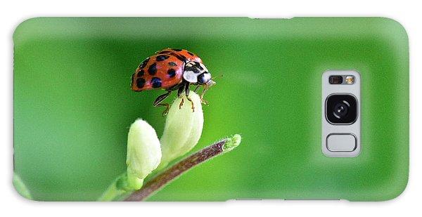 Lady Bug Galaxy Case