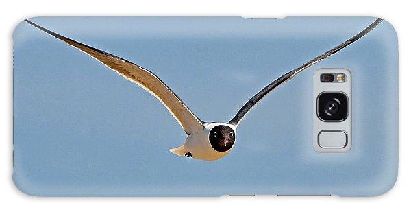 Laughing Gull Galaxy Case