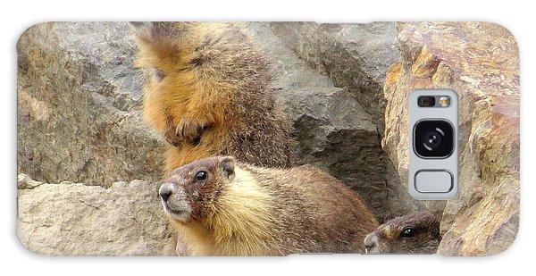 Marmot Trio Galaxy Case