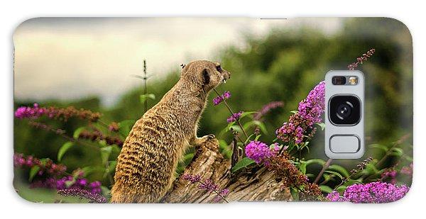 Meerkat Galaxy S8 Case - Meerkat Lookout by Martin Newman