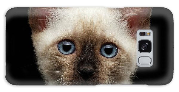 Mekong Bobtail Kitty With Blue Eyes On Isolated Black Background Galaxy Case