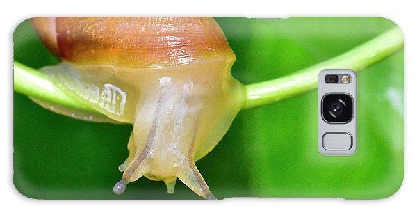 Morning Snail Galaxy Case