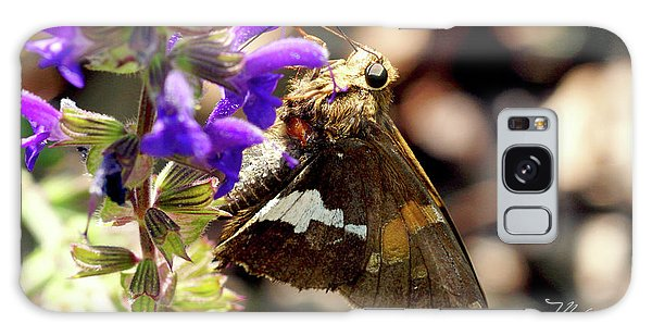 Moth Snack Galaxy Case