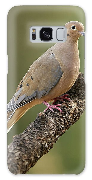 Mourning Dove Galaxy Case