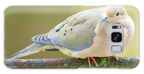 Mourning Dove On Tree Branch Galaxy Case