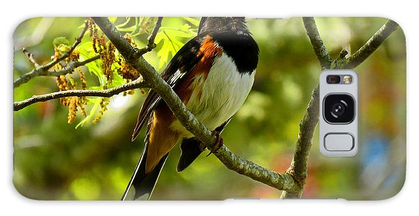 Towhee In Song Galaxy Case