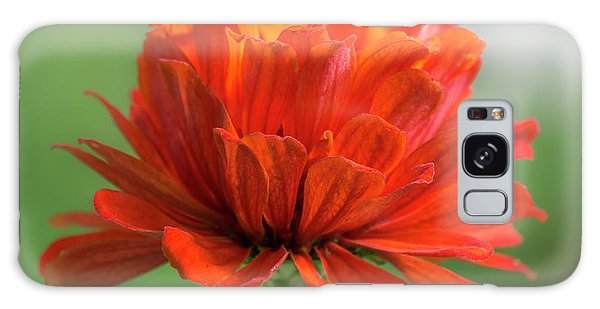 Red Zinnia  Galaxy Case by Jim Hughes