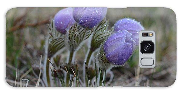 Pasque Flowers  Galaxy Case