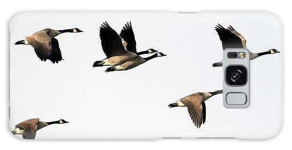 Canada Goose Galaxy Case - Pattern Of Six by Mike Dawson