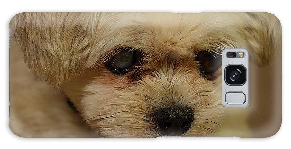 Pet Portrait - Annie Galaxy Case