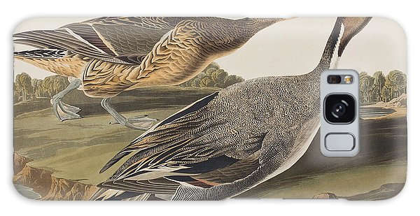 Pin-tailed Duck Galaxy Case
