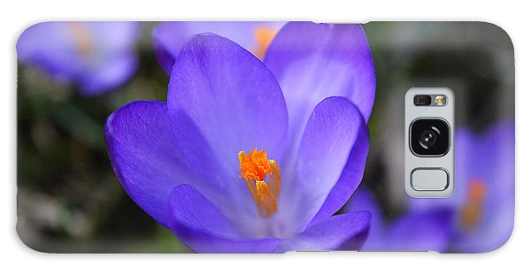 Purple Crocuses - 2015 Galaxy Case