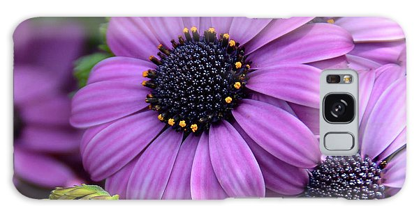African Daisy Galaxy Case